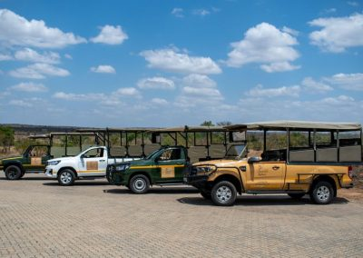 Daily Kruger Safaris