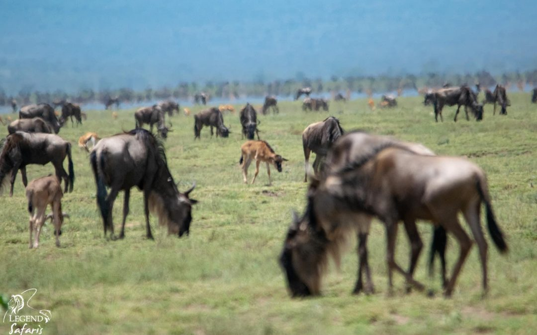 Essence of Tanzania and Calving Safari