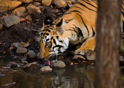 tiger safari and tour bhandavgarh
