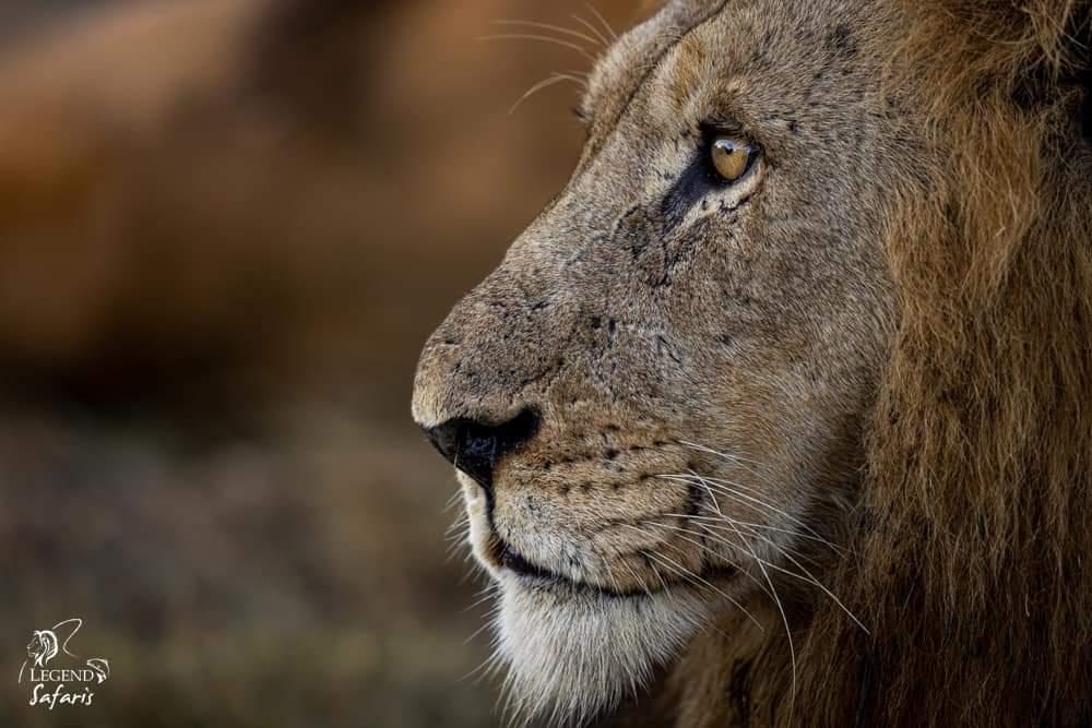 Safari Report – Elephant Plains Big Cat Photo Safari