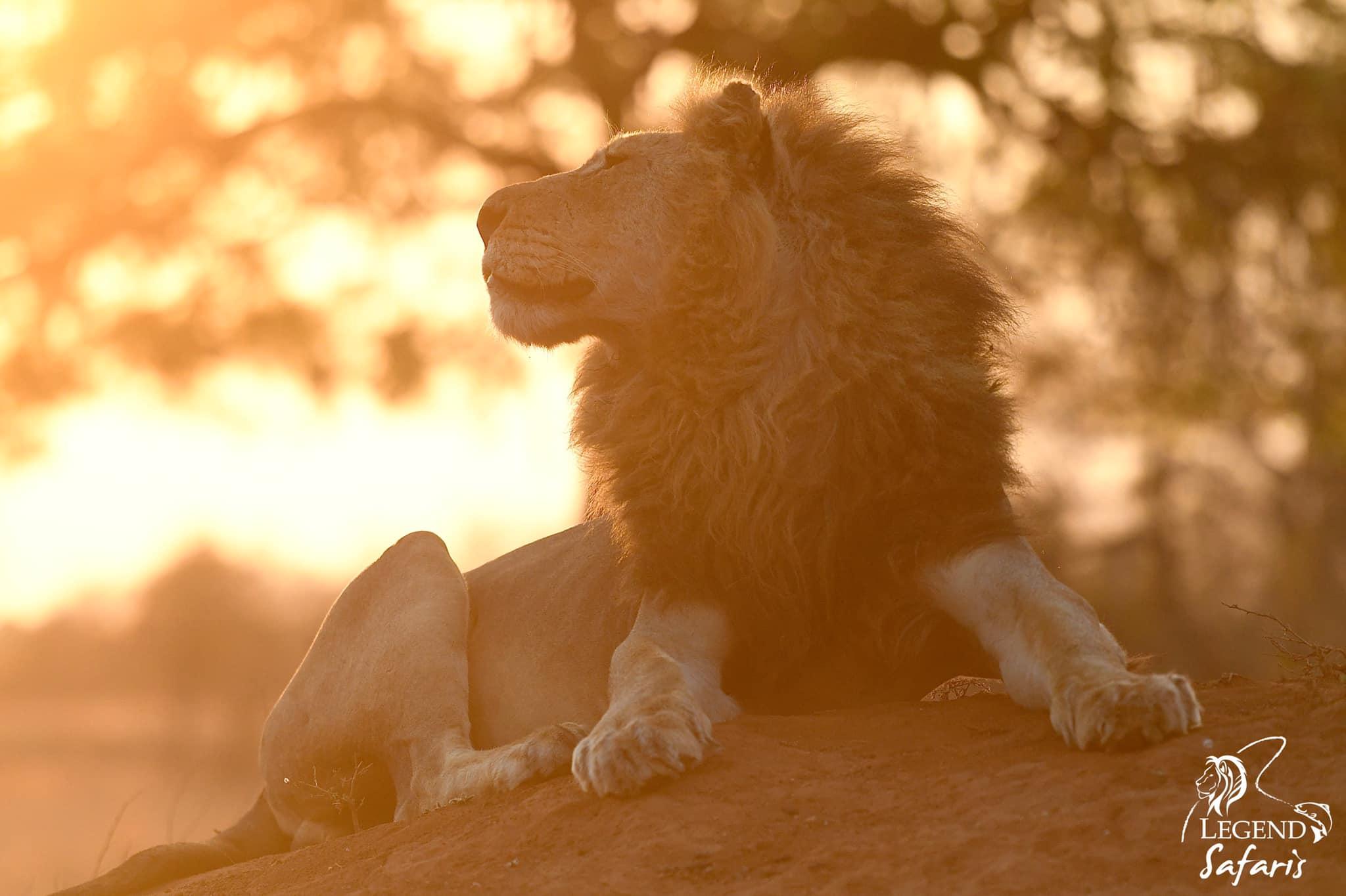 big cats luxury safari in south africa